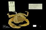 Neostrengeria lasallei by Universidad de La Salle. Museo de La Salle